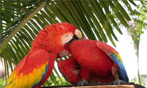 【暑期】广州、长隆野生动物园、长隆欢乐世界 长隆水上乐园、飞鸟公园双飞5日游