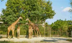 【玩转长隆】广州长隆野生动物园、珠海长隆海洋王国、长隆欢乐世界4日游