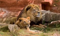 【暑期】广州长隆野生动物园、珠海长隆海洋王国 长隆水上乐园、长隆欢乐世界5日游
