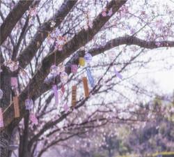 【太湖寻梅】无锡梅园赏春、太湖游船、苏州二日游