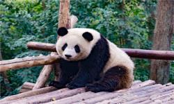 【品味九寨】2-6人精品小包团 成都、九寨沟、黄龙、熊猫乐园、松洲古城 纯玩6 日游