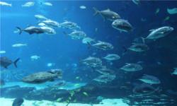 【特价】芜湖大白鲸海洋公园1日游