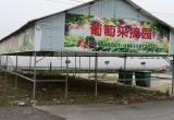萄宝园家庭农场