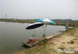 清水湾生态鱼庄