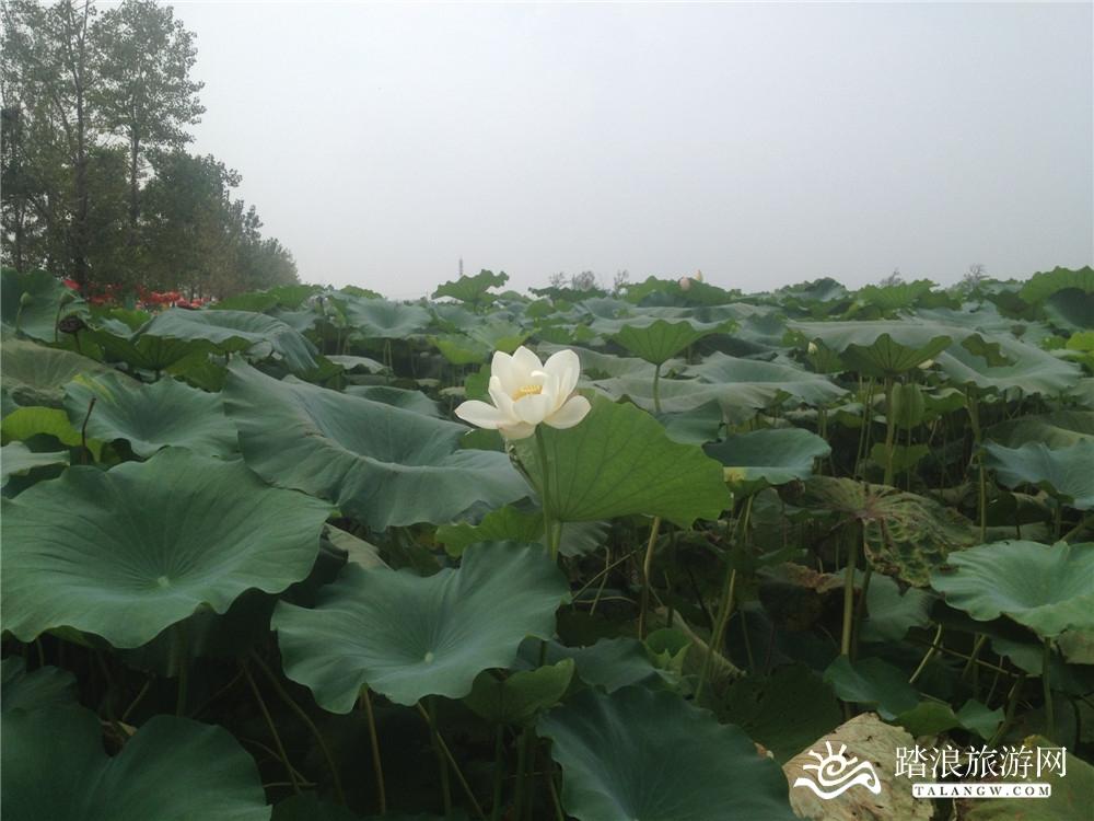 龙栖地公园_风景图片
