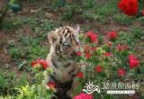合肥野生动物园_风景图片