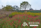 小团山香草农庄