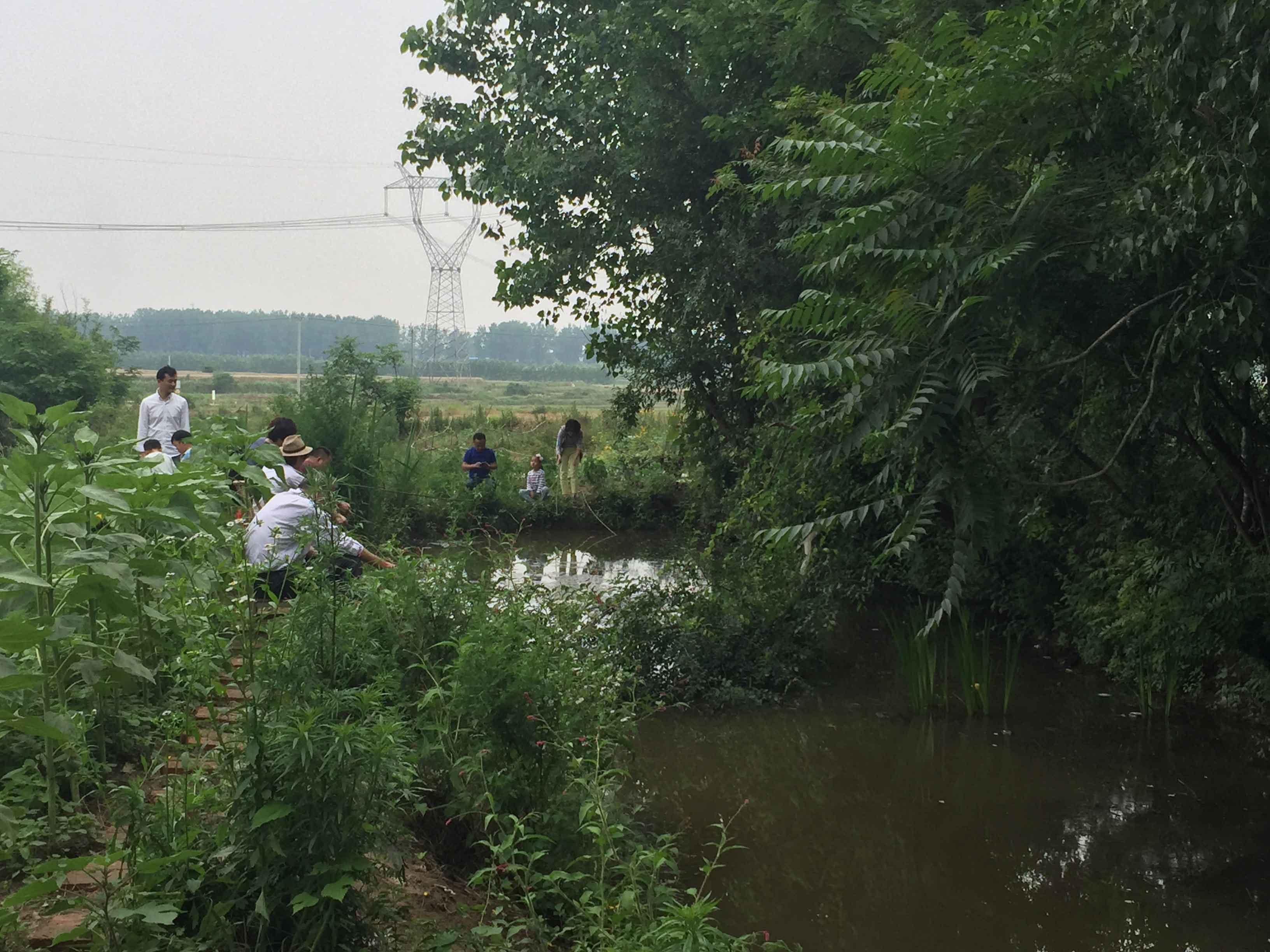 長豐楊廟鎮馬郢村_風景圖片